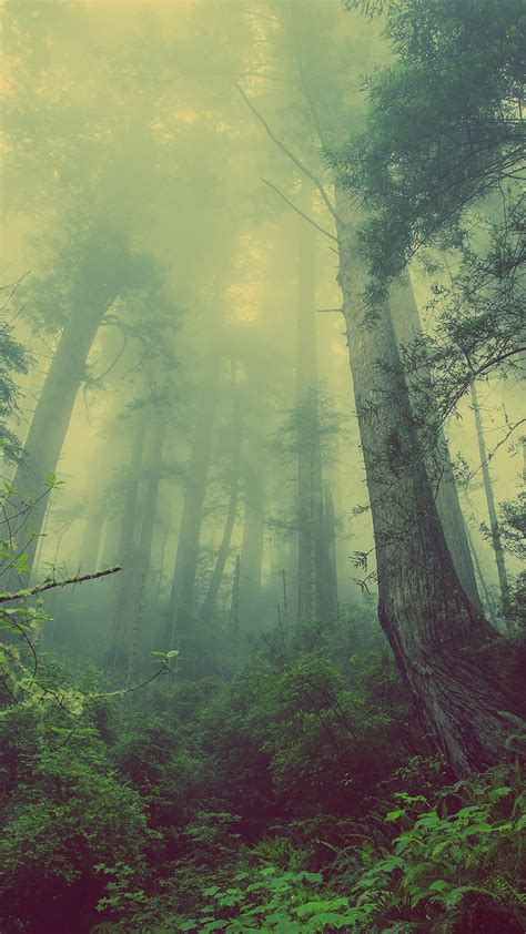 imagenes 4k android foggy gloomy forest eerie android wallpaper free download