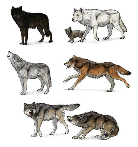 How To Draw A Wolf Standing