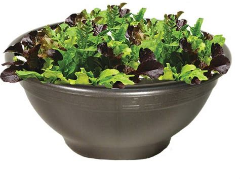 Planter Bowls Large by Container Gardening Plasticotta Bowl Planters