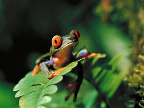 the beuty of the tree frog