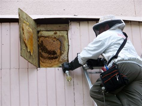 Important Services: Finding Bee Hive Removal Near Me   Dallas Care Grounds Electricians