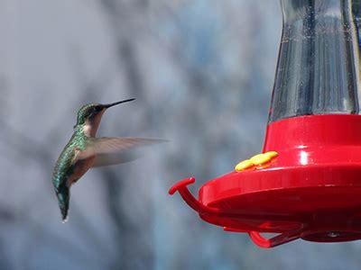 hummingbird feeders gardening solutions university of