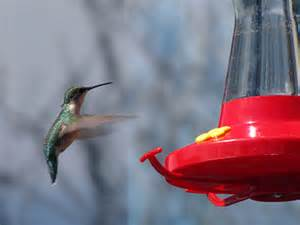 hummingbird feeders gardening solutions university of