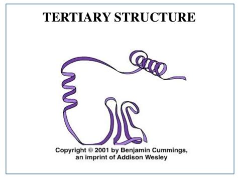 protein tertiary structure protein structure details