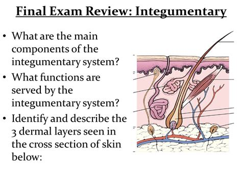 describe the cross section final exam review general a p ppt video online download