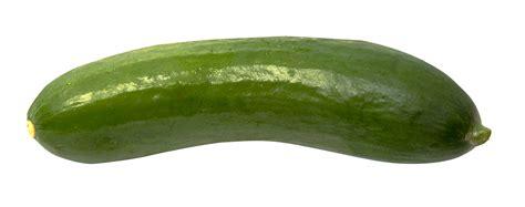 png image cucumber png image pngpix