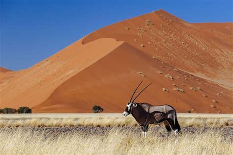 Gembok Auto 50 how to plan an affordable botswana safari timbuktu
