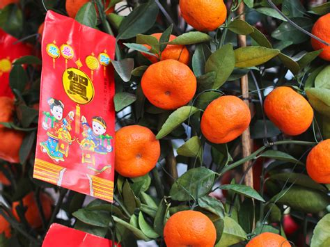 new year lucky oranges 8 lucky foods to ring in the new year serious eats
