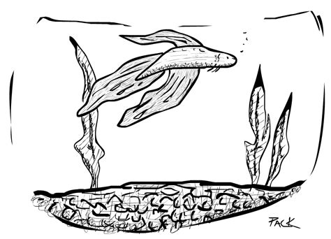 free coloring pages of beta fish