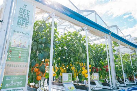 mobile greenhouse naturefresh farms mobile greenhouse impacting purchasing
