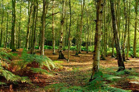 en un bosque muy bosques malditos del mundo