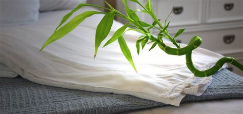 bamboo versus cotton sheets organic bamboo vs egyptian cotton bed sheets