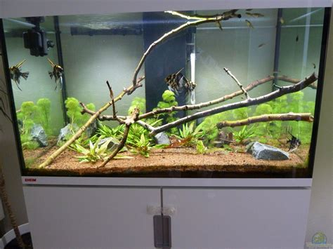 eheim led beleuchtung exle no 31800 from the category community tanks