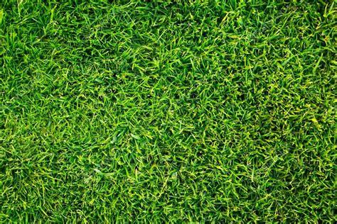 grass pattern website green grass pattern stock photo 169 mustang 79 25020239