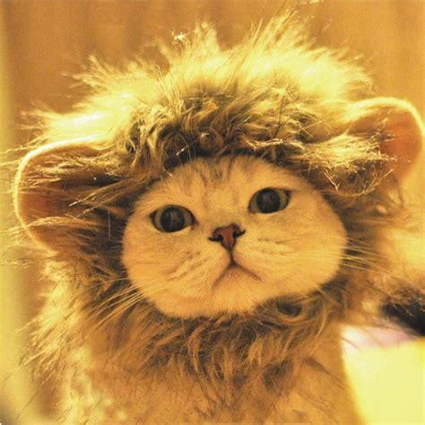 film avec un lion noir crini 232 re de lion pour chat
