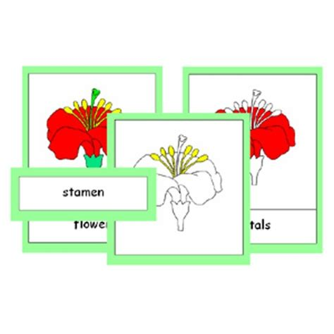 montessori printable files montessori parts of a flower cards pdf file