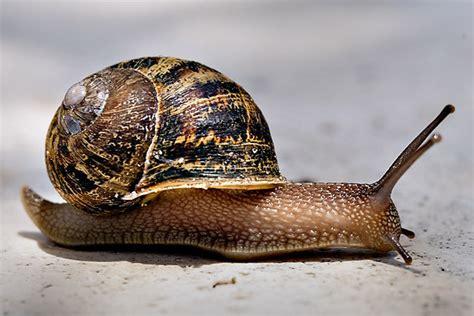 un caracol a snail page 2 for no 16 identify items in picture game identificar las cosas en la imagen