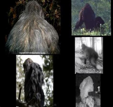 best bigfoot frontiers of zoology bigfoot evidence top five bigfoot