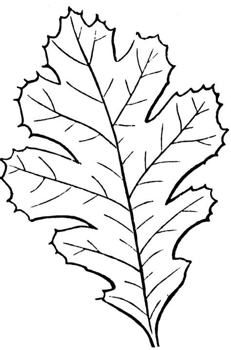 coloring sheet leaf pattern simple leaf pattern coloring home