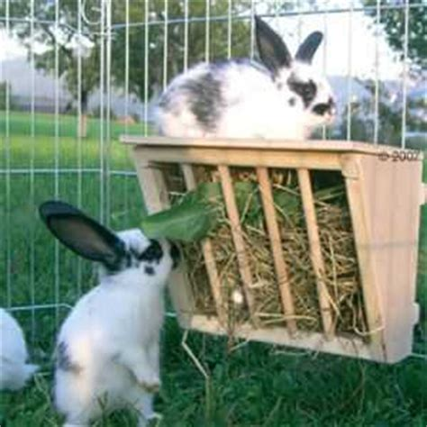 rabbit hay racks what are the options bunny approved