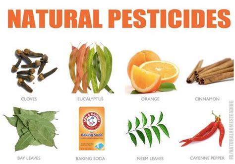 natural pesticides alternatives  home  garden pest
