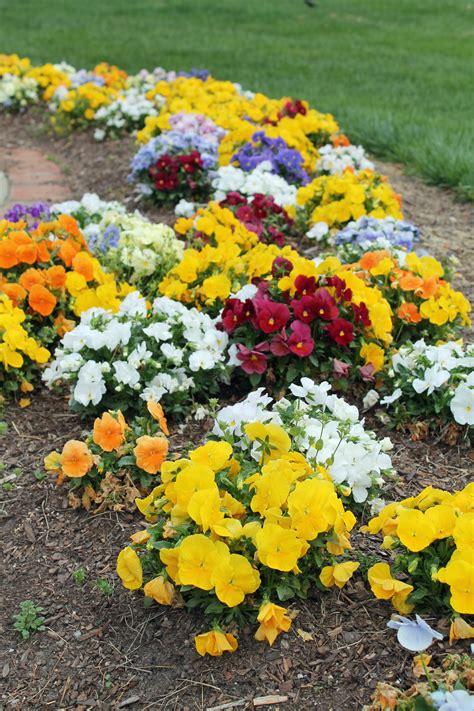 Bottom 10 Annual Flowers Garden Housecalls Annual Garden Flowers