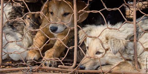 achtung das leid der tiere kunstpelz ist oft echtes