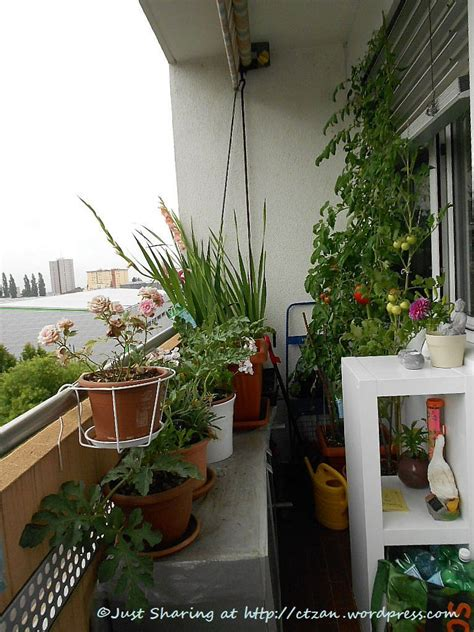 Gardening Ideas For Small Balcony Apartment Balcony Garden Ideas Images