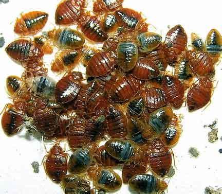 bed bug killers bed bug killing spray  bed bug treatment bedbug store