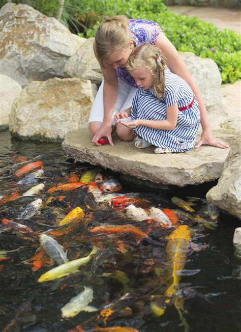 backyard pond fish water gardens backyard ponds archives blain s farm