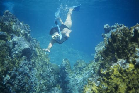 for snorkeling the best snorkeling in oahu your shore guide