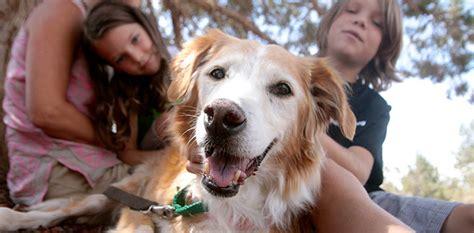 pets best friend animal volunteer opportunities best friends animal society