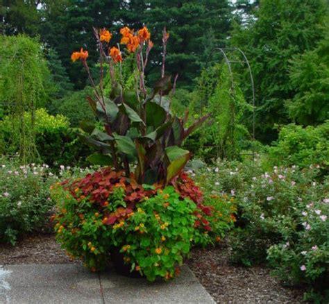container gardening toronto cullen water your garden with perspiration toronto
