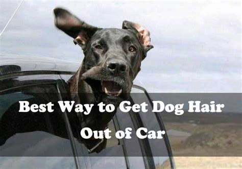 Best Way To Get Dog Hair Out Of Car Easily Alldogsworld Com