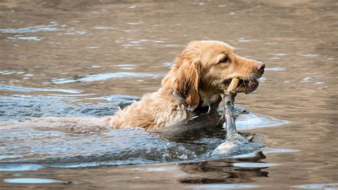 leptospirosis dogs how serious is a leptospirosis infection