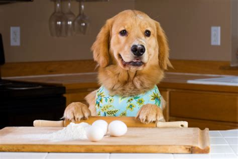 puppy eggs feed your rescue home cooked food everybody eats news