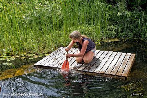 Schwimmteich Mit Fischen by Schwimmteiche Wildbienenschutz Im Naturgarten