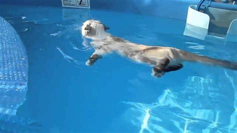 katze schwimmt gerne youtube