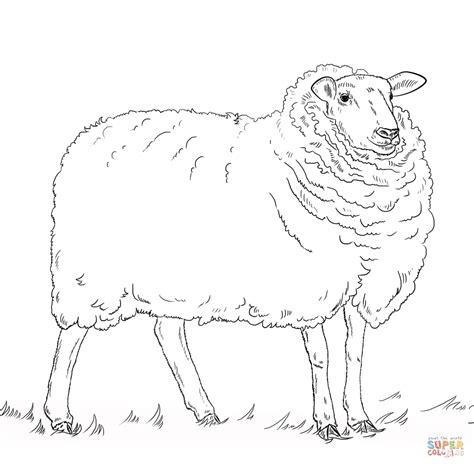 big sheep coloring page schaap kleurplaat gratis kleurplaten printen