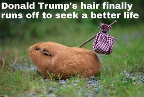 funny donald trump memes     laugh