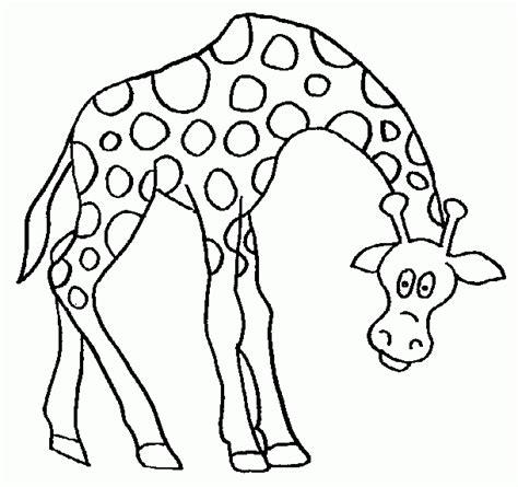 imagenes jirafas para colorear cara jirafa para colorear imagui