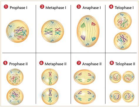 Or Adalah Biologi Gonzaga Try Out Biologi Kelas Xii Ipa Smstr 1