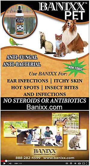 antifungal shoo for dogs banixx pet anti fungal anti bacterial
