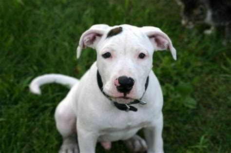 aggressive dogs list list of dangerous breeds lovetoknow