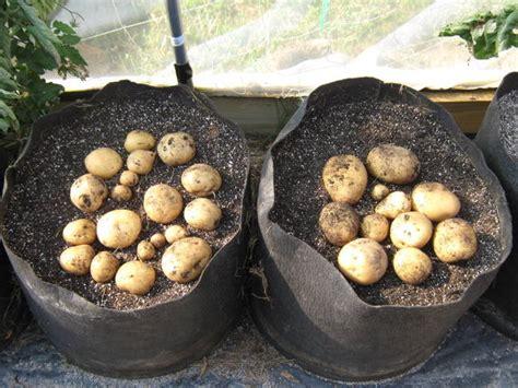 Spacing Vegetable Plants in Garden Beds   Abundant Mini