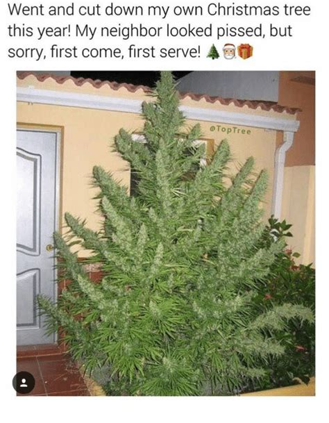 went and cut down my own christmas tree this year my