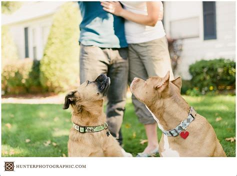 Our best friends ? curious canines and engagement sessions