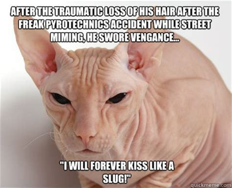 Hairless Cat Meme - hairless cat meme