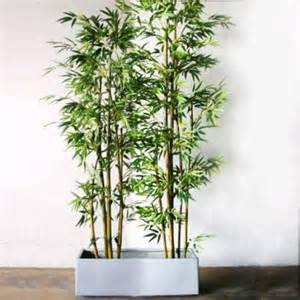 small potted bamboo plants