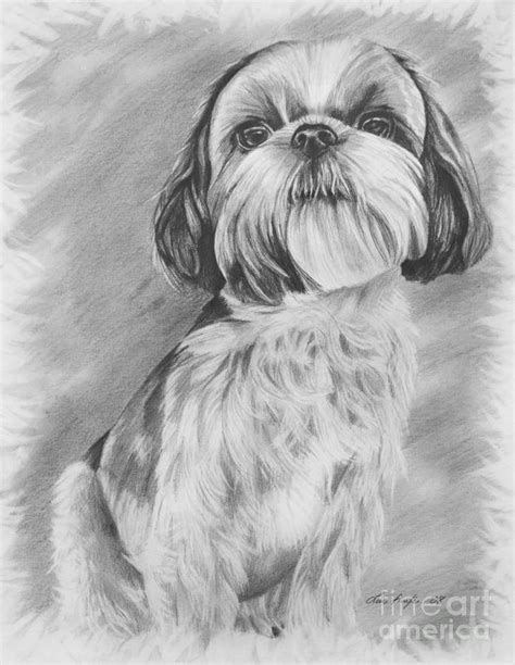 how to draw a shih tzu drawing of a shih tzu drawing by lena auxier